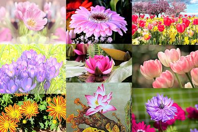 Flower Collage Download Jigsaw Puzzle