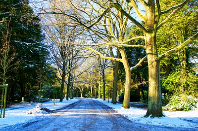 Winter Avenue Download Jigsaw Puzzle